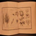 1797 EXQUISITE Bernardin Saint-Pierre Etudes Nature Illustrated Botany Plants