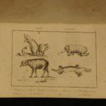 1836 1ed Oceania Rienzi Polynesia Voyages MAPS Australia Captain Cook Pacific