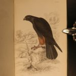 1838 Jardine BIRDS Ornithology Ireland & Britain Illustrated Falcons Hawks Owls