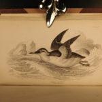 1843 Jardine BIRDS 31 Hand-Colored Illustrated Aviary Ireland Quails ORNITHOLGY