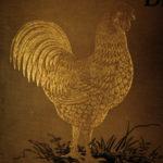 1886 Profits in Poultry Chicken Breeding Turkey Ducks FARMING Agriculture