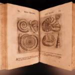 1672 Moscardo Museum of Curiosities Illustrated Oddities Archaeology Verona RARE