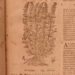 1623 1ed Masawaih Persian & Arabic Medicine HERBAL Cures + ARABIAN Commentary
