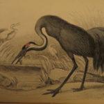 1840 Jardine BIRDS 34 Hand-Colored Illustrated Aviary Ireland Quails ORNITHOLGY