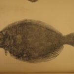 1857 FISHING American Angler's Guide Fish Species Flounder Hook Illustrated