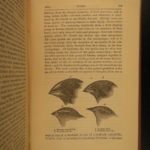 1887 Charles Darwin Voyages HMS Beagle Evolution Biology Journal of Researches
