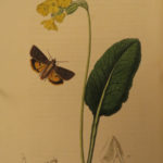 1831 British Entomology Insect Ireland Curtis Moth Bee Plants COLOR Illustrated