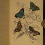 1896 1ed BUTTERFLY Handbook of Lepidoptera Moths Illustrated Entomology Kirby