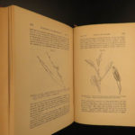 1885 Charles Darwin Movement of Plants Botany Gardens Seeds Evolution Science