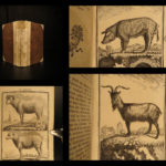 1769 Buffon Illustrated DOGS Cats Deer Angora Sheep Goats Animals Natural History