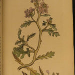1795 English Botany James Sowerby Color Illustrated Flowers British Plants RARE