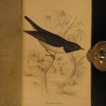 1837 Jardine BIRDS West Africa 34 Hand-Colored Illustrated Aviary ORNITHOLGY