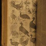 1610 BIRDS Ornithology Ulisse Aldrovandi Science Illustrated Bats HARPY Peacocks