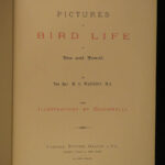 1882 Pictures of Bird Life Ornithology Giacomelli Illustrated Aviary Poems RARE