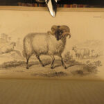1836 Buffalo Bison Cows Goat Sheep Buffalo Antelope Illustrated Jardine Mammalia