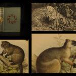 1889 1ed Queensland Cannibals Lumholtz Australia Aborigine Illustrated Maps