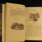 1804 1ed British BIRDS Bewick Ornithology Eagles Owl Ducks 2v SET Illustrated