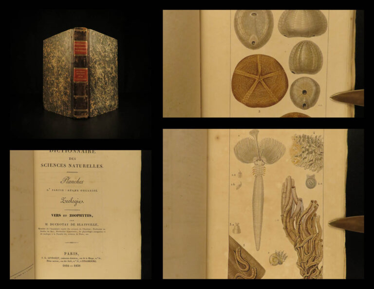 Image of 1816 Zoology Illustrated Marine Biology Sea Coral Anemone Sponges Zoophytes