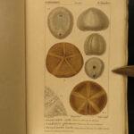 1816 Zoology Illustrated Marine Biology Sea Coral Anemone Sponges Zoophytes