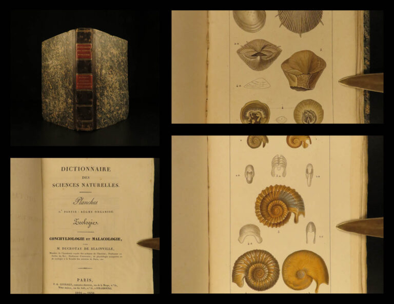 Image of 1816 SHELLS Zoology Illustrated Mollusks Conch Animal Science Marine Biology