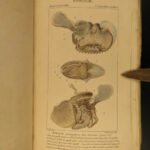 1816 SHELLS Zoology Illustrated Mollusks Conch Animal Science Marine Biology