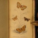 1835 Jardine Butterflies Entomology Lepidopterology EXQUISITE Butterfly Art