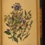 1855 Loudon British Wild FLOWERS Botany Illustrated BOTANICAL Floriculture ART
