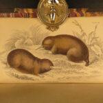 1842 Jardine Mammals Naturalist LION Skunks Raccoon Bats Illustrated Capybara