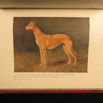 1911 1ed Book of the DOG British Dogs Illustrated Pomeranians Cynology Leighton