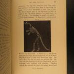1881 DINOSAURS Paleontology Fossils Pre-Historic America Illustrated