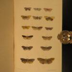 1872 1ed British Moths Animal Science anti Darwin Evolution 2000 Color Figures