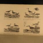1878 American Ornithology BIRDS Alexander Wilson Audubon Illustrated Species