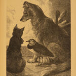 1882 1ed Stories About Dogs by Surr Harrison Weir ART Illustrated Pets Poems