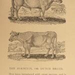 1885 Bewick British BIRDS Plates Quadrupeds Aesop Fables 5v SIGNED Limited ed