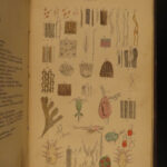 1864 1ed The Microscope by Griffith Color Illustrated Biology Botany Plants