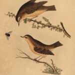 1845 British Song BIRDS Bolton Harmonia Ruralis Illustrated Art Nest & Eggs 2in1