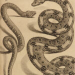 1788 1ed Natural History of SNAKES Lacepede Serpents Lizards Reptiles 4v Set
